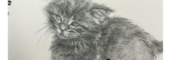 kitten-schetsboek-2016