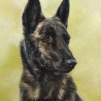 'Dutch shepherd dog', 30x40 cm, oil painting (sold/commission)