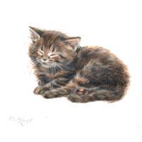 'Maine coon Kitten', 10x10 cm, Marjolein Kruijt (NFS)