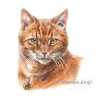 'Red cat', miniature 10x10 cm, Marjolein Kruijt (sold/commission)