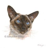 Miniature portrait, siamese I, acrylics, 10x10 cm, Marjolein Kruijt (sold)