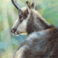 'Chamois', 18x13 cm, oil painting $1,000 incl. frame