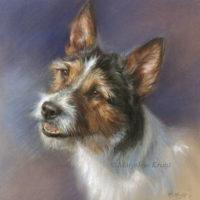 Jack russell portrait, 25x25 cm pastel, Marjolein Kruijt (sold/commission)