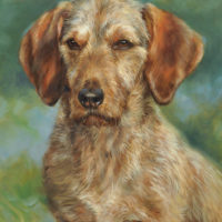 'Basset fauve de bretagne', 40x30 cm, oil (commission/sold)