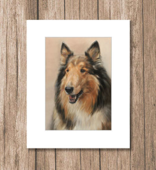 Long-haired collie petportrait artprint