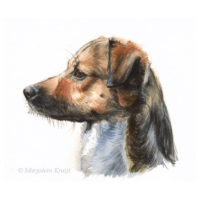 'Dog en profil', 20x17 cm, watercolour painting (for sale)
