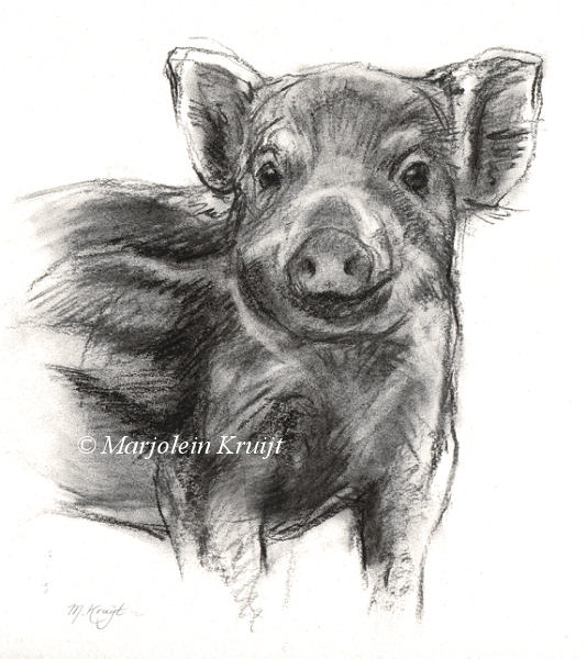 'Young wild pig', charcoal 30×27 cm (for sale)