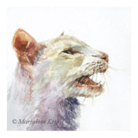 'Meowing cat', 15x15 cm, watercolour (for sale)