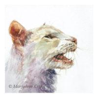 'Meowing cat', 15x15 cm, watercolour (for sale)