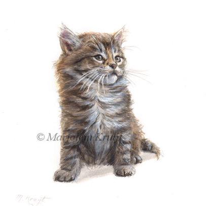 'Maine coon Kitten', 14x14 cm, Marjolein Kruijt (for sale)