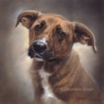 'Chavdar'-rescued dog, 30x30 cm, oil (sold/commission)