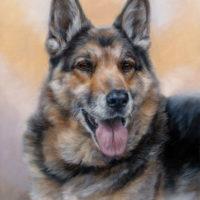'Shepherd dog'-Igor, 40x30 cm, oil painting (sold/commission)