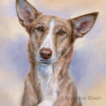 'Podenco'-Goofy, 50x40 cm, oil painting (sold/commission)