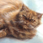 'Red persian cat', 24x30 cm, oil portrait (sold/commission)