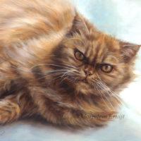 'Red persian cat', 24x30 cm, oil portrait (sold/commission)