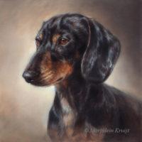 'Dachshund'-Bobby, 30x30 cm, oil portrait (sold/commission)