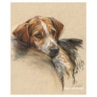 'Beagle', 40x30 cm, pastel paitning (for sale)