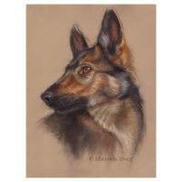 'Shepherd dog pup', 35x25 cm, pastel (for sale)