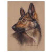 'Shepherd dog pup', 35x25 cm, pastel (for sale)