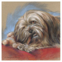 'Lhasa apso', 30x30 cm, pastel painting (for sale)
