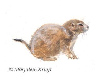 Prairiehondje illustratie