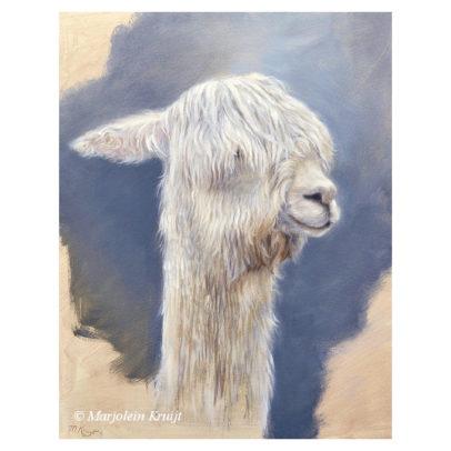 'Suri alpaca', 24x30 cm, olieverf schilderij (te koop)