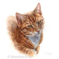 'Red cat portrait', 10x10 cm, Marjolein Kruijt (sold/commission)
