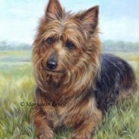 'Australian terrier', 50x40 cm, oil painting (sold)
