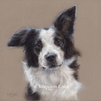 'Bordercollie', 20x20 cm, pastel portret (sold)