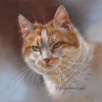 'Cat portrait - Dikkie dik', 25x25 cm, pastel (sold)