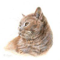 'Br. shorthair', miniature portrait , 10x10 cm (sold)