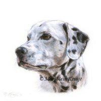 'Dalmatian', miniature portrait , 10x10 cm (sold)