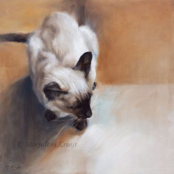 'Siamese', 30x30 cm, oil painting (for sale)