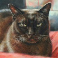 'Burmese'-cat portrait, 18x24 cm, oil (sold/commission)