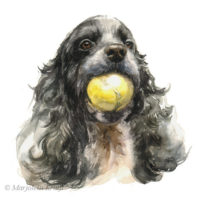 'Cocker spaniel'- portrait, 16x16 cm, watercolor (for sale)