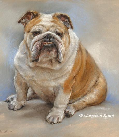 dia9-engelse-buldog-portret-pastel