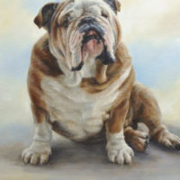 'English buldog'-petportrait, 60x80 cm, oil (sold/commission)