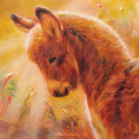 'Sunlit donkey', 21x21 cm, oil painting (for sale)
