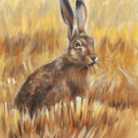 'Hare', 18x24 cm, oil painting (for sale)