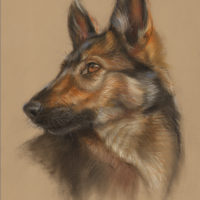 'Shepherd pup'-portrait, 25x35 cm, pastel (for sale)