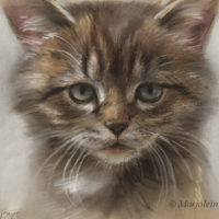 'Kitten', 22x17 cm, pastel painting (for sale)