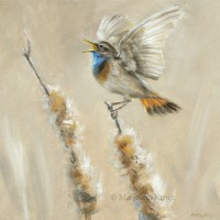 'Bluethroat', 20x20 cm, oil painting (for sale)