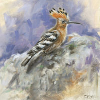 'Hoopoe study', 20x20 cm, oil painting (for sale)