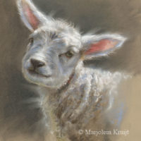 'Lamb', 20x26 cm, pastel drawing, Marjolein Kruijt (NFS)