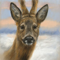 'Roebuck', 28x39 cm, pastel painting (for sale)