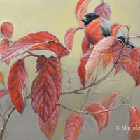 'Red autumn'-Bullfinch, 30x24 cm, oil painting
