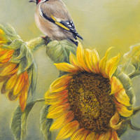 'Sunflowers'-Eur.goldfinch, 18x24 cm, oil painting (for sale)