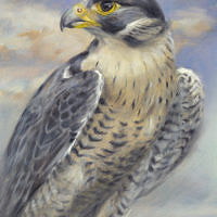'Peregrine Falcon', 15x20 cm, oil painting (for sale)
