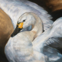 'Tundra Swan', 60x40 cm, oil painting (for sale)