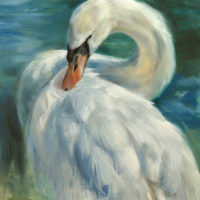 'Mute swan', 25x30 cm, oil painting (for sale)